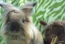 Bunny Love / Rabbit related goodies for the bun in your life or gifts for yourself.  Many of the products here are for sale (from amazing designers) and benefit rabbit shelters like the House Rabbit Society.