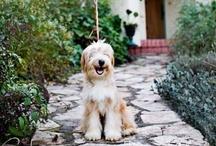 Puppy Love / by Elle S