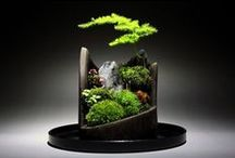:: Bonsai :: / The Art of Bonsai Trees