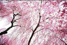 :: Nature ::