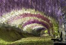 :: Garden ::