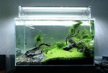 :: Aquariums ::