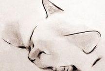 Catart / Kunstzinnige katten....