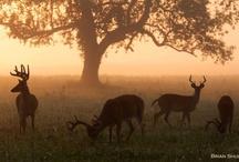 Nature At It's Best / by Victoria Powless-Descher