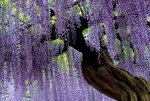 tree love n such / by Lisa Eshenbaugh