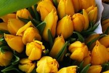 Fresh tulips..