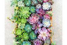 Terrariums and Succulents
