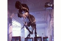 @McrMuseum :  Stan the T. rex  / The skeleton of Stan the Tyrannosaurus rex (T.rex) was excavated by the Black Hills Institute in 1992, after its discovery by an amateur palaeontologist, Stan Sacrison.   http://www.museum.manchester.ac.uk/yourvisit/galleries/stanthetrex/
