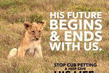 Canned Hunting & Knuffelfarms / Knuffelen met leeuwen? En wat gebeurt er als ze groot zijn?
