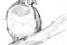 Kresba: zvířata