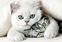 """Cats / """"Home is where your cats are"""" / by Katy Harris"""