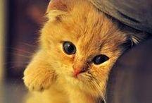 Kittens & Cute Shit!