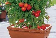 Natureza Sustentável / Pra quem gosta de plantar hortaliças, temperos, suculentas e frutíferas em pouco espaço.