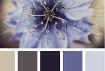 Coordinating Colors / by Whitney W.
