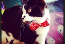 Mouser, Yastrzemski, & Dexter / Everything I need to spoil my cats.  / by Amie Gibson