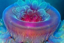Creatures Under Water
