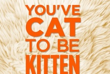 Quotes for Meow / by Meow Mix