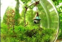Fairy and Gnome Homes  / Moss and stones and twigs and ferns... oh my! / by Suzan