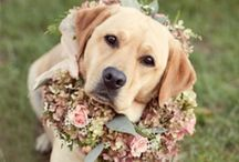 Mans Best Friend / {My Bellissima - NY & NJ Wedding Planning and Special Events Design} www.mybellissima.com
