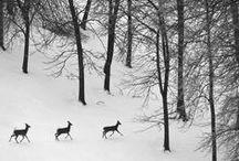 into the wild / / by r a c h e l ☽
