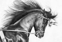 Animal pencil drawings.