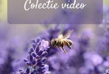 Beauty from Nature - Video / Retete cosmetice cu ingrediente naturale, ingrijirea naturala a tenului, solutii pentru probleme, ingrijirea naturala a corpului, sanatate, nutritie, echilibru