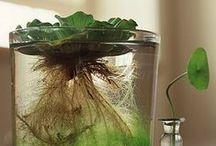 plant tending