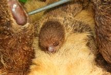 Cute Critters / by National Aquarium