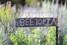 Scout Bee / Beekeeper into biodynamic bee stewardship, native bees, honey bees, pollinators, backyard/urban beekeeping, live removal and relocation as alternative to extermination, bee and pollinator conservation, BVT / apitherapy, bee related art, etc.,     / by Pell Mell Compendium
