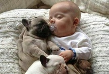 Cuteness Overload / A collection of the cutest pug puppies on the planet!  I have serious pug fever :)
