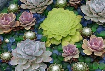 Succulent Obsession / by Andrea Hughes