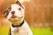 Woof! Wag! Love.