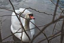 Fauna nice and funny / immagini di animali
