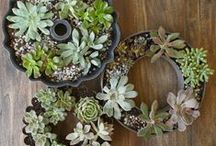Succulent succulents / by Upcycle That