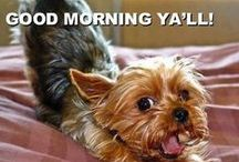 Yorkie, Westie and other critter pics  / by Tammara Darnell