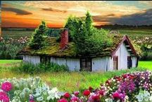 House / by Daisy