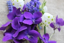 Violets, Peonies, & Friends / Flowers I Love: For Their Color, Form, or Just For Their Being. / by Vera Louise Riddle
