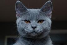 Meow Meow / sooooo cuteeeeee