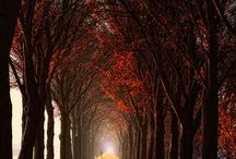 Around the time of Fall / by Gage Kelly