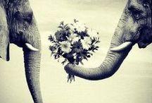 Éléphants :)