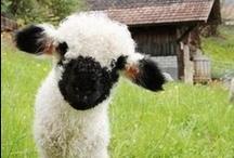 Photos - Critters / i love cute animals!