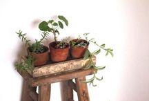 Abode - If i had a garden - indoor edition