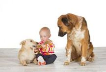 Consigli per i nostri quadrupedi / consigli per gli animali domestici