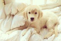 Puppy Love / by Nicole Johnston