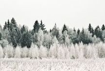 TreesBeards / by Marla Penny