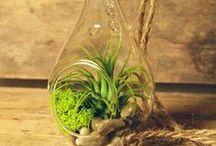 Bella Plants :: Terrarium Happiness! / by Angela's Bella Flora, Inc.