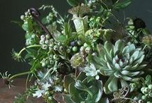 Wedding :: Succulents / We heart succulents!  You can do so many things with them...bouquets, corsages and bouts, potted indoors or outdoors.  A florist's delight!!!!! / by Angela's Bella Flora, Inc.