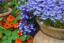 Gardening :: Zone 3  / ZONE 2 AND 3 GARDENING / by Angela's Bella Flora, Inc.