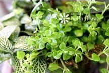 Bella Plants :: Indoor Gardening / by Angela's Bella Flora, Inc.