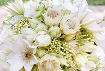 Weddings :: White / Love white in mass.  So many flower options if white is your main color! / by Angela's Bella Flora, Inc.